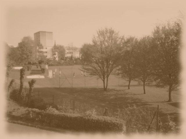 gaenseblumenwiese ade (april 2010)